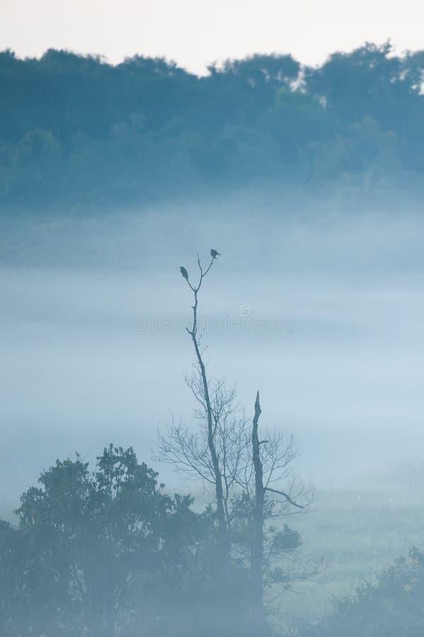 Πουλιά ζεύγους που αναπαράγουν στο δέντρο και τη χειμερινή εποχή υδρονέφωσης Άδυτο άγριας φύσης Phukaew, Ταϊλάνδη βουνό και τροπι στοκ φωτογραφία με δικαίωμα ελεύθερης χρήσης