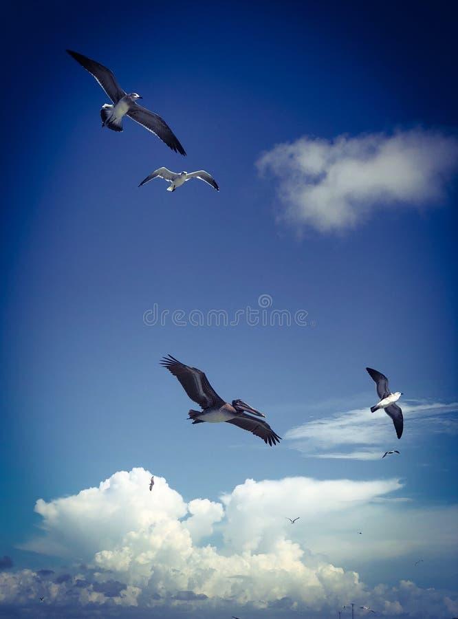 Πουλιά θάλασσας που πετούν στο μπλε ουρανό με τα σύννεφα στοκ φωτογραφίες