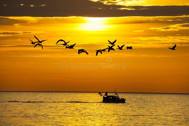 Πουλιά και μια βάρκα στο ηλιοβασίλεμα στοκ φωτογραφίες με δικαίωμα ελεύθερης χρήσης