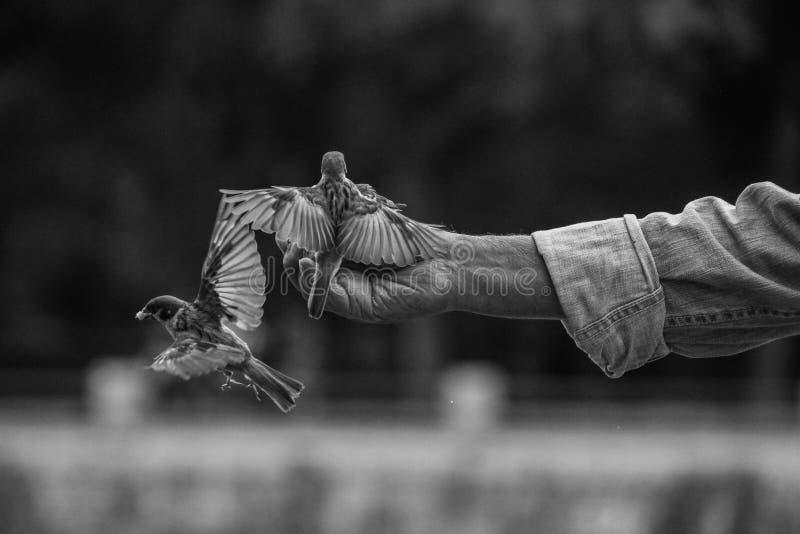 Πουλιά οδών στοκ εικόνες
