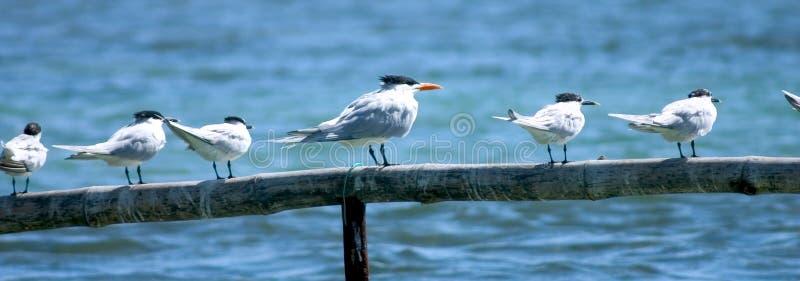 Download πουλιά παραλιών στοκ εικόνες. εικόνα από υπαίθρια, δάσος - 107108
