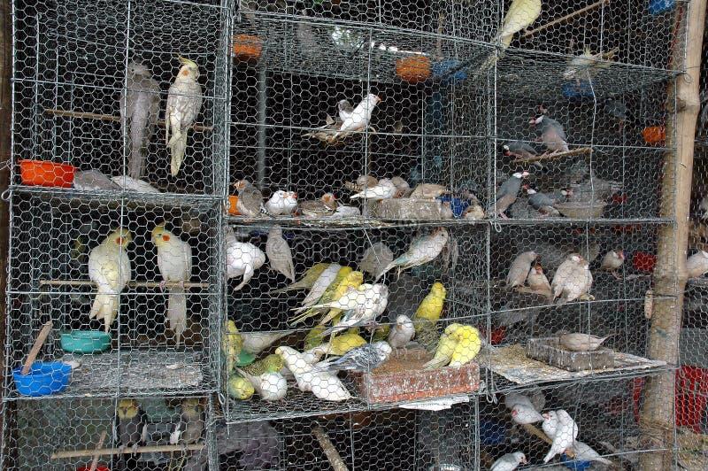 πουλιά που εγκλωβίζονται στοκ εικόνες με δικαίωμα ελεύθερης χρήσης