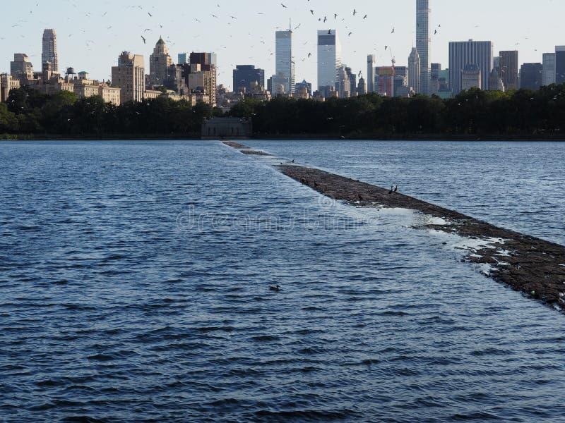 Πουλιά που πετούν πέρα από το Central Park στοκ φωτογραφίες