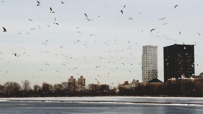 Πουλιά που πετούν στον ουρανό του Μανχάτταν στοκ φωτογραφία με δικαίωμα ελεύθερης χρήσης