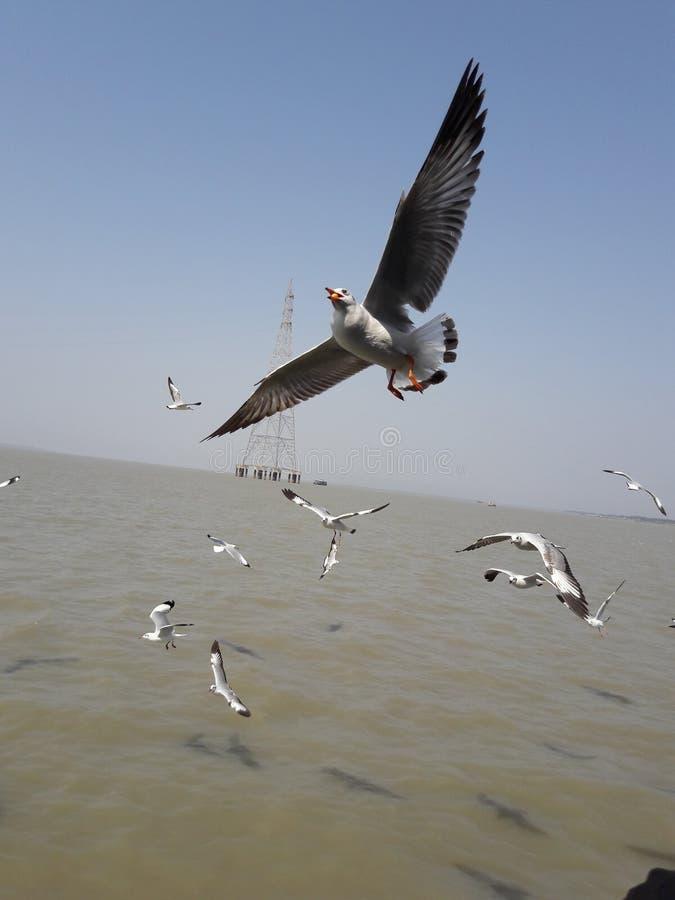πουλιά που πετούν τον ουρανό στοκ εικόνες
