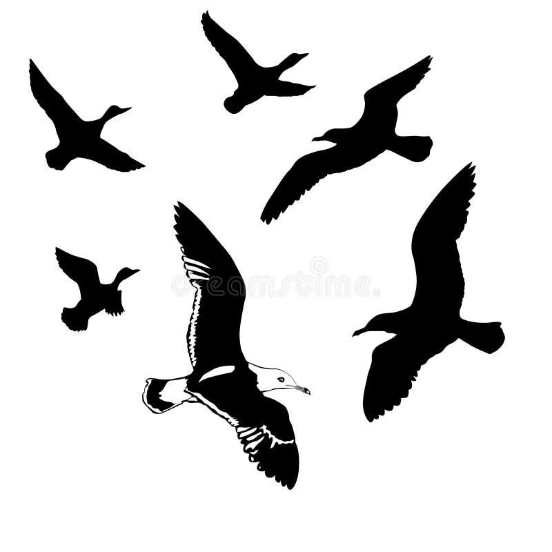 πουλιά που πετούν το διάν&up ελεύθερη απεικόνιση δικαιώματος