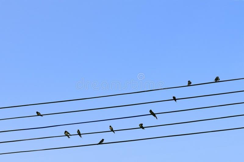 Πουλιά σε ένα καλώδιο στοκ εικόνα με δικαίωμα ελεύθερης χρήσης