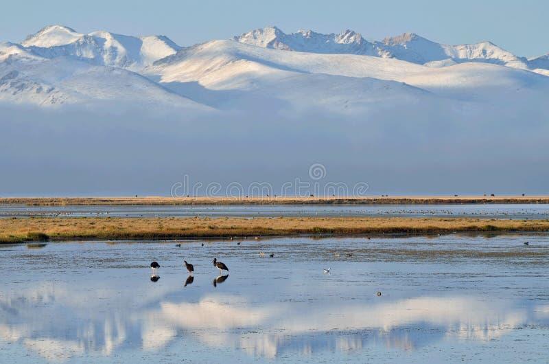 """Πουλιά σε γιος-Kul """"τελευταία λίμνη """"νωρίς το πρωί, κεντρικά βουνά της Τιέν Σαν, Κιργιστάν, κεντρική Ασία στοκ εικόνες με δικαίωμα ελεύθερης χρήσης"""