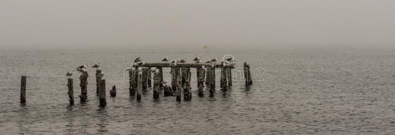 Πουλιά σε μια παλαιά αποβάθρα στην υδρονέφωση στοκ εικόνες