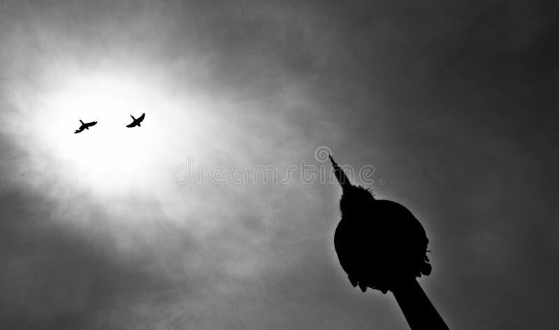 Πουλιά στον ήλιο στοκ εικόνα με δικαίωμα ελεύθερης χρήσης