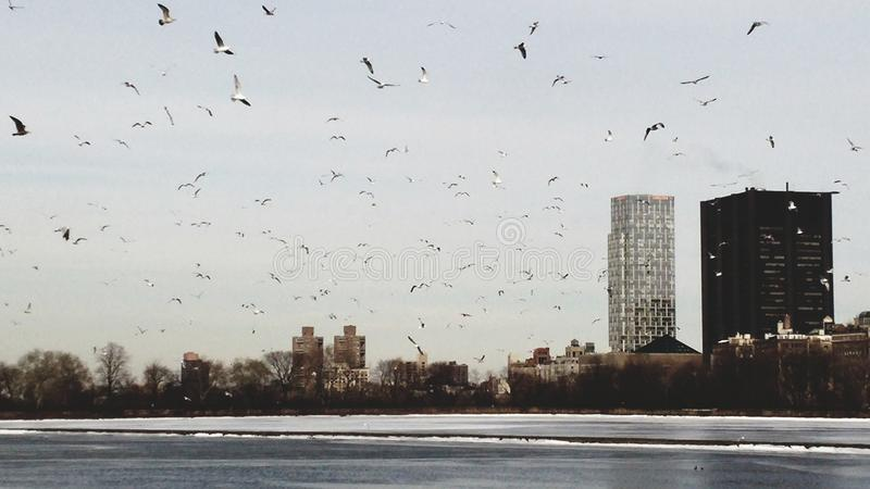 Πουλιά στον ουρανό του Μανχάτταν στοκ φωτογραφίες με δικαίωμα ελεύθερης χρήσης