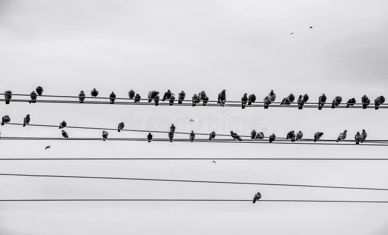Πουλιά στο καλώδιο στοκ φωτογραφίες