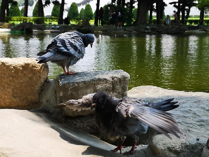 Πουλιά στοκ εικόνες