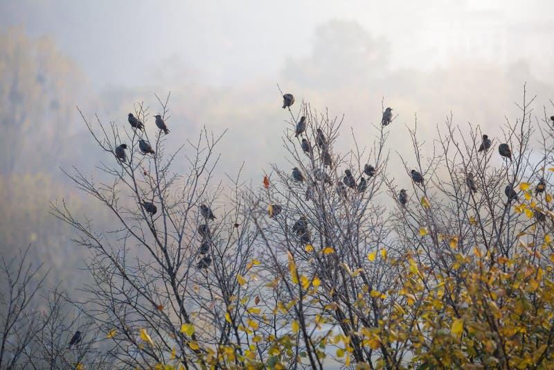 Πουλιά ψαρονιών που κάθονται στο δέντρο το πρωί στοκ φωτογραφία