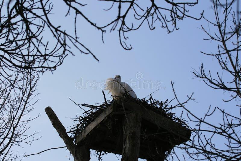 Πουλιά 10 στοκ φωτογραφία