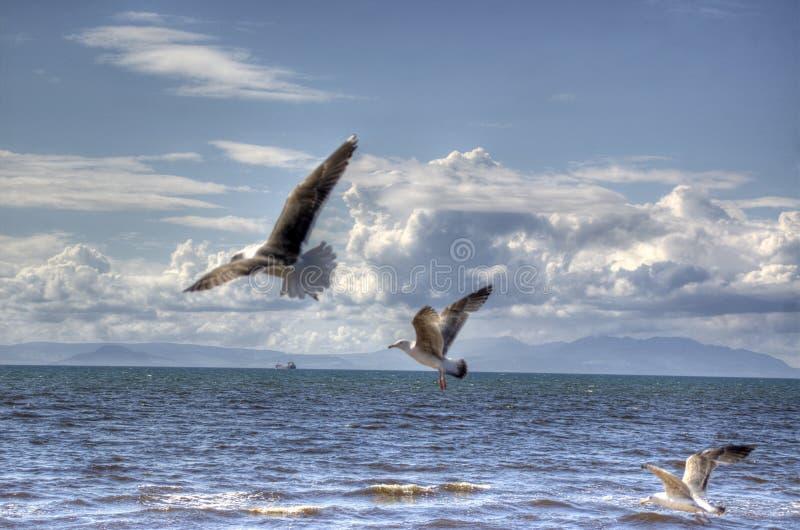 πουλιά στοκ φωτογραφίες με δικαίωμα ελεύθερης χρήσης