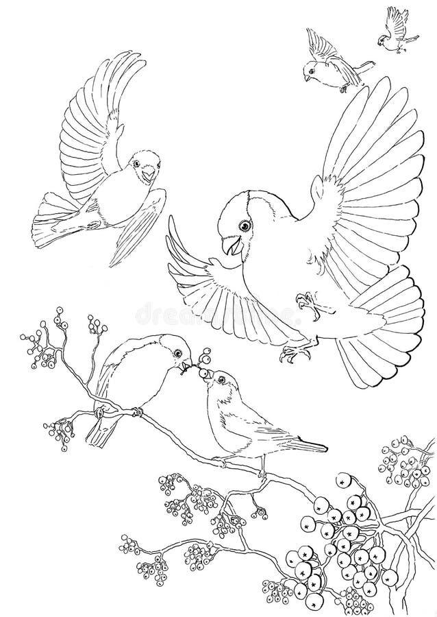 Πουλιά Bullfinches και τέφρα βουνών διανυσματική απεικόνιση