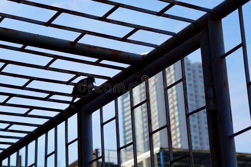 Πουλί έξω από το κλουβί στοκ εικόνες με δικαίωμα ελεύθερης χρήσης