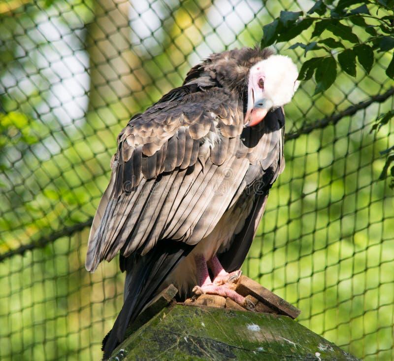 πουλί αρπακτικό στοκ εικόνες με δικαίωμα ελεύθερης χρήσης