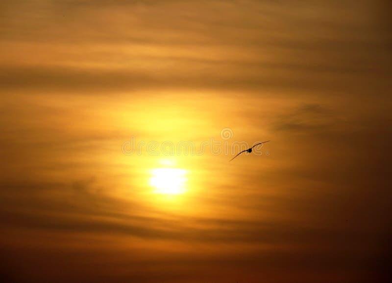 Πουλί και ήλιος στοκ φωτογραφία με δικαίωμα ελεύθερης χρήσης