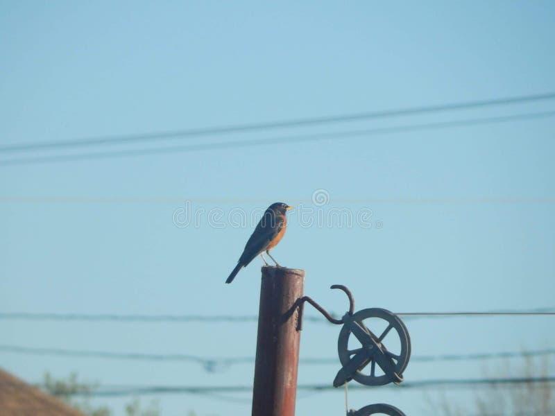 Πουλί που εξετάζει τους μπλε ουρανούς στοκ φωτογραφίες με δικαίωμα ελεύθερης χρήσης