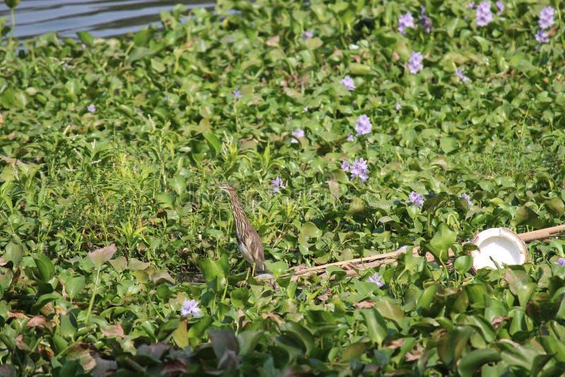 Πουλί πουλιών στη λίμνη στοκ φωτογραφίες