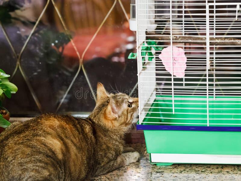 Πουλί προσοχής γατών στο κλουβί στοκ φωτογραφία με δικαίωμα ελεύθερης χρήσης
