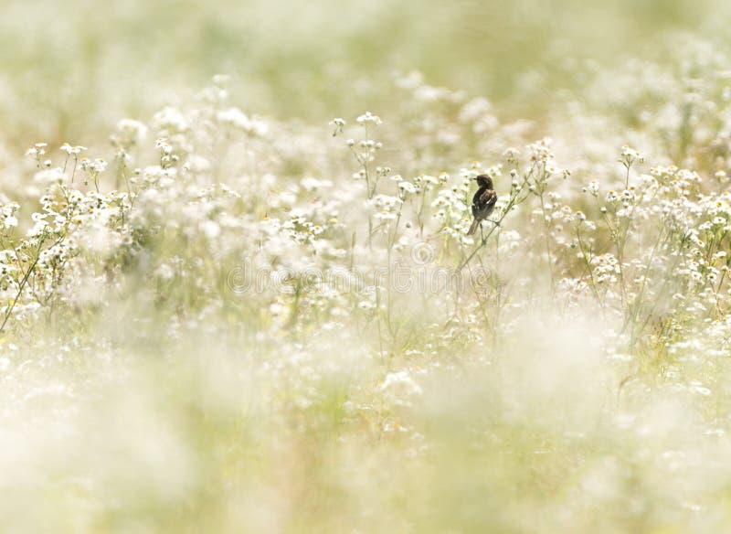 Πουλί σε έναν τομέα λουλουδιών στοκ εικόνες