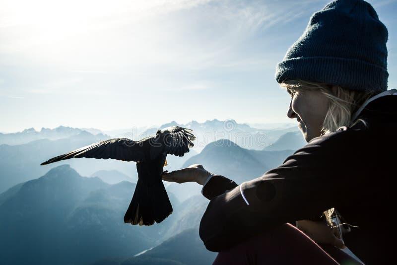 Πουλί στα βουνά στοκ εικόνα