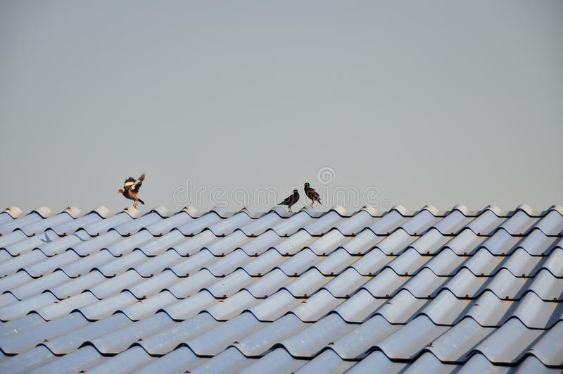Πουλί στη στέγη στοκ εικόνες