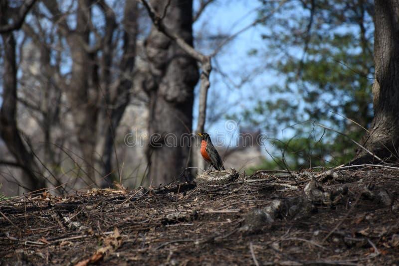 Πουλί στο Central Park στοκ εικόνες με δικαίωμα ελεύθερης χρήσης