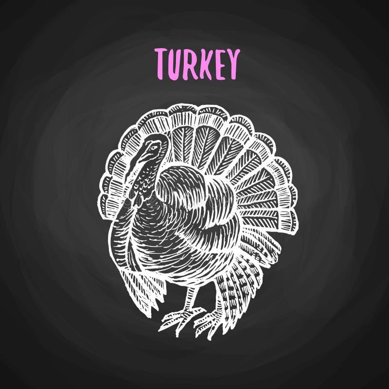 Πουλί Τουρκία στο ύφος κιμωλίας στον πίνακα ελεύθερη απεικόνιση δικαιώματος