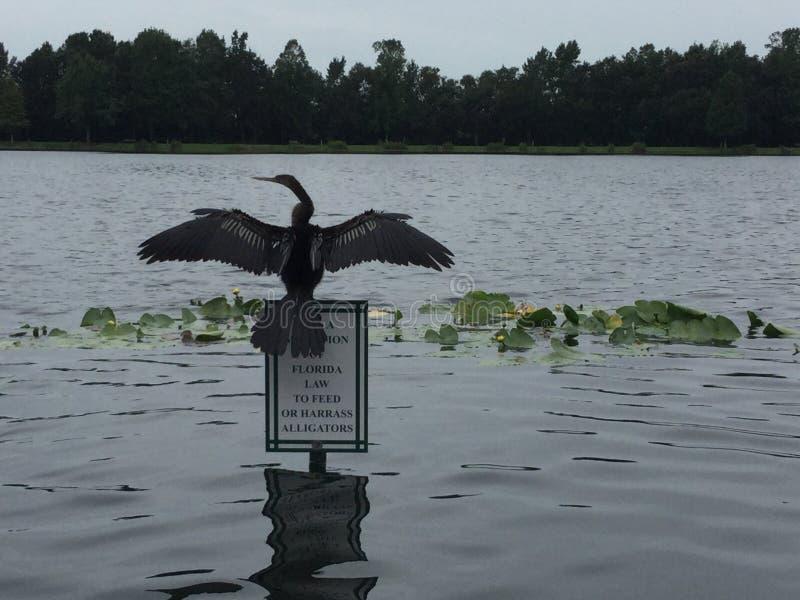 Πουλί φύσης στοκ φωτογραφία με δικαίωμα ελεύθερης χρήσης