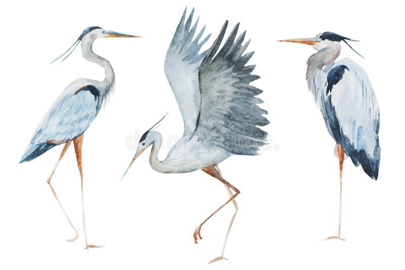 Πουλιά ερωδιών Watercolor ελεύθερη απεικόνιση δικαιώματος