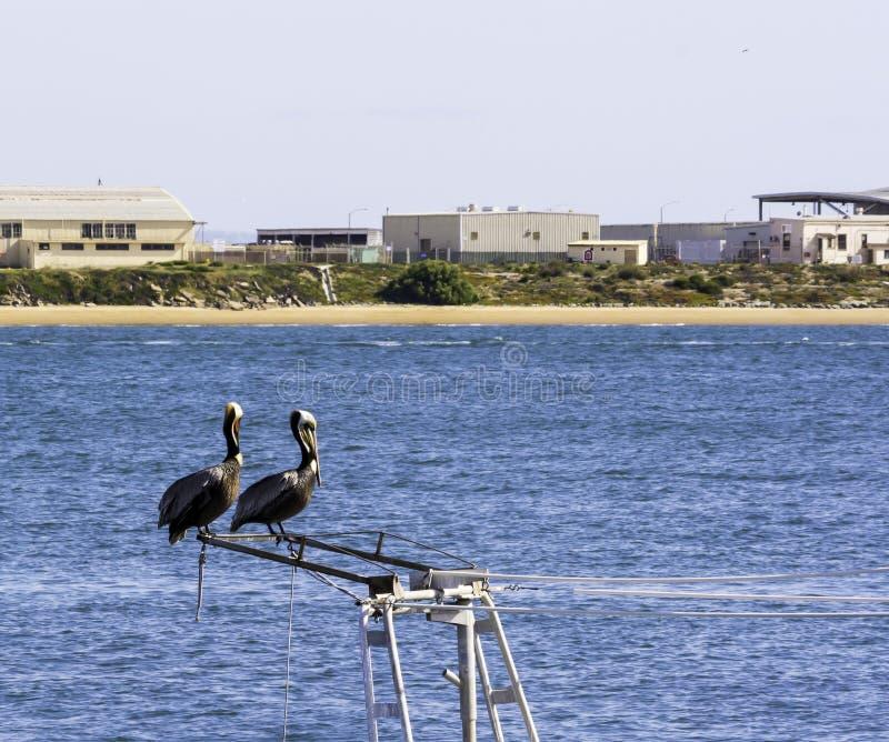 Πουλιά θάλασσας στοκ εικόνα με δικαίωμα ελεύθερης χρήσης