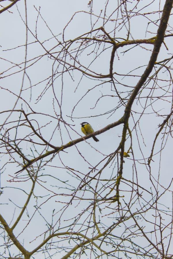 Πουλιά και ζώα στην άγρια φύση στοκ φωτογραφία με δικαίωμα ελεύθερης χρήσης