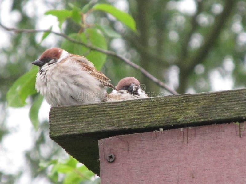 Πουλιά και το περιβάλλον τους στοκ φωτογραφία