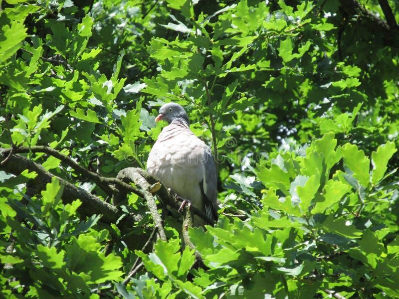 Πουλιά και το περιβάλλον τους στοκ φωτογραφίες με δικαίωμα ελεύθερης χρήσης