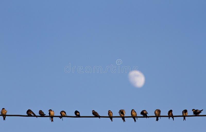 Πουλιά καλωδίων στοκ εικόνες