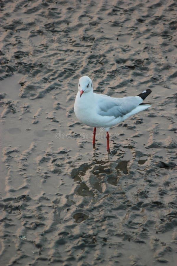 Πουλιά, μαγγρόβιο στοκ φωτογραφία με δικαίωμα ελεύθερης χρήσης