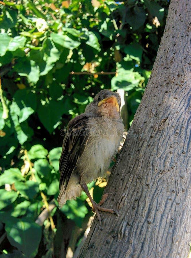 πουλιά μωρών στοκ εικόνες με δικαίωμα ελεύθερης χρήσης