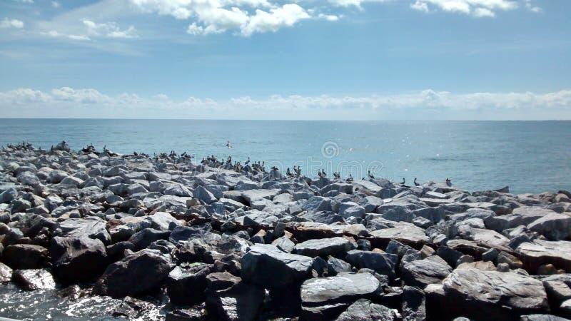 Πουλιά νερού στοκ φωτογραφία με δικαίωμα ελεύθερης χρήσης