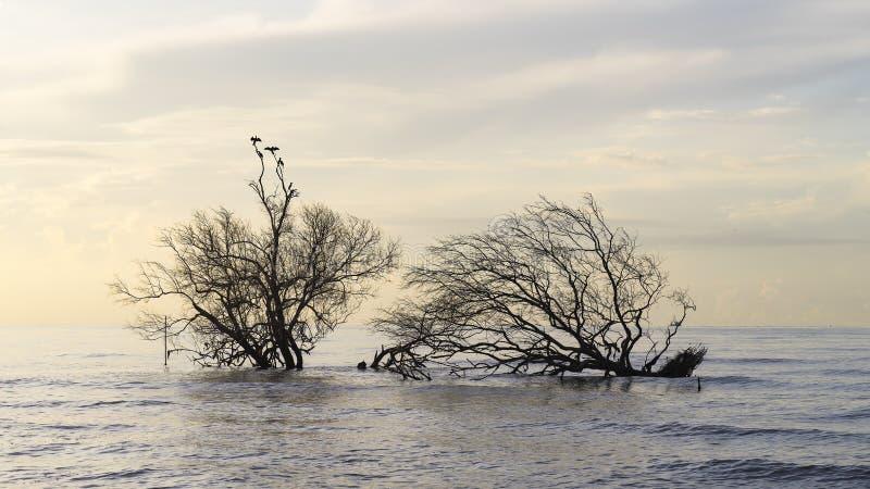 Πουλιά που κάθονται στα δέντρα μαγγροβίων στοκ εικόνα