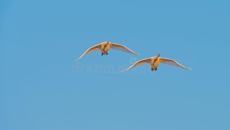 Πουλιά που πετούν σε έναν ηλιόλουστο ουρανό στοκ φωτογραφίες