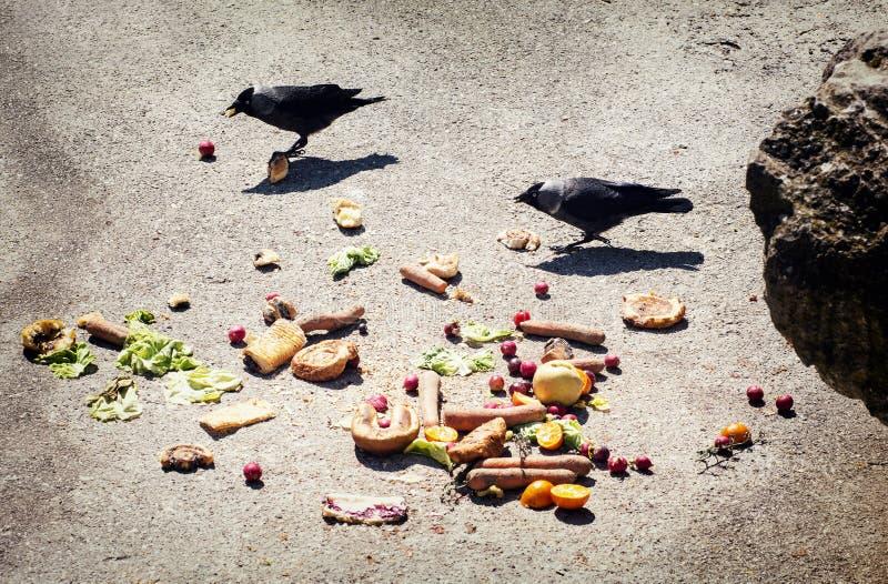 Πουλιά που τρώνε το λαχανικό στο έδαφος στοκ φωτογραφίες με δικαίωμα ελεύθερης χρήσης