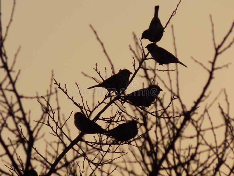 Πουλιά σε έναν κλάδο στο ηλιοβασίλεμα στοκ εικόνα με δικαίωμα ελεύθερης χρήσης