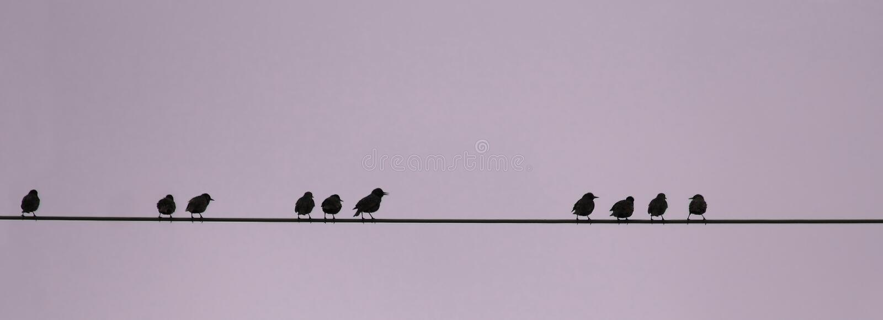 Πουλιά σε ένα καλώδιο, αριθμητική ακολουθία στοκ φωτογραφία
