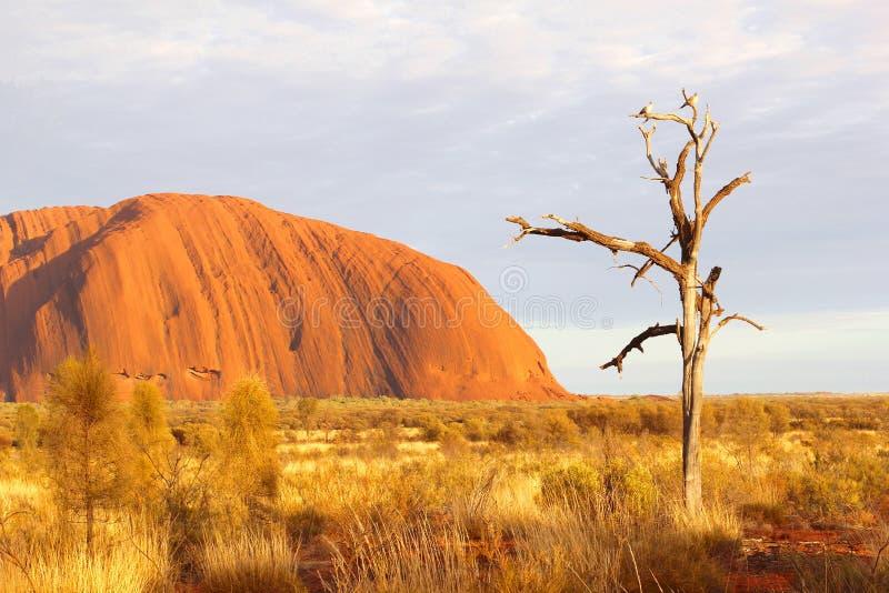 Πουλιά στα χρώματα ανατολής νεκρών δέντρων και Uluru στην αυγή στοκ φωτογραφία με δικαίωμα ελεύθερης χρήσης