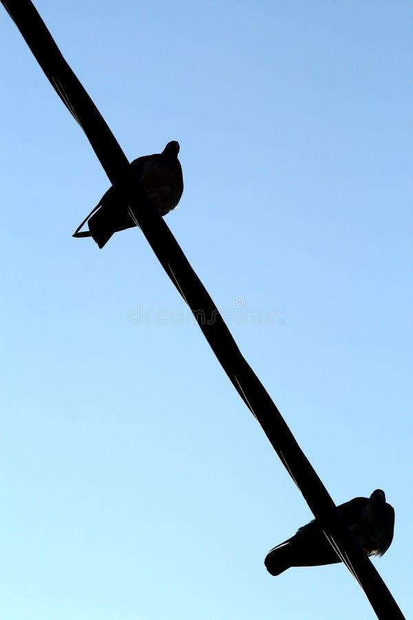Πουλιά στο καλώδιο στοκ φωτογραφία με δικαίωμα ελεύθερης χρήσης
