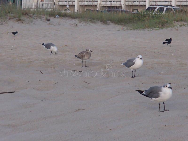 Πουλιά των διαφορετικών φτερών στοκ φωτογραφία